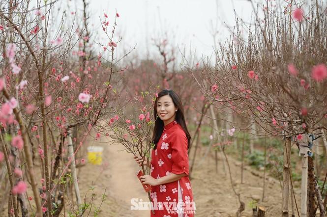 """Cận cảnh vườn đào Nhật Tân được giới trẻ """"Check-in"""" ngày cuối năm - ảnh 1"""