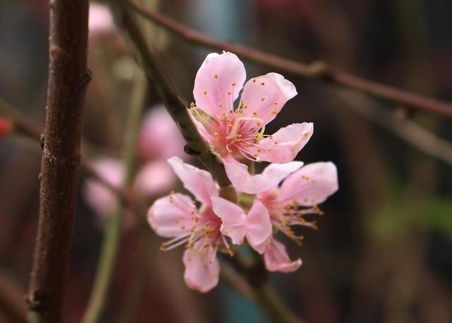 Thị trường 21/12: Dàn hoa lan đột biến 200 tỷ gây xôn xao