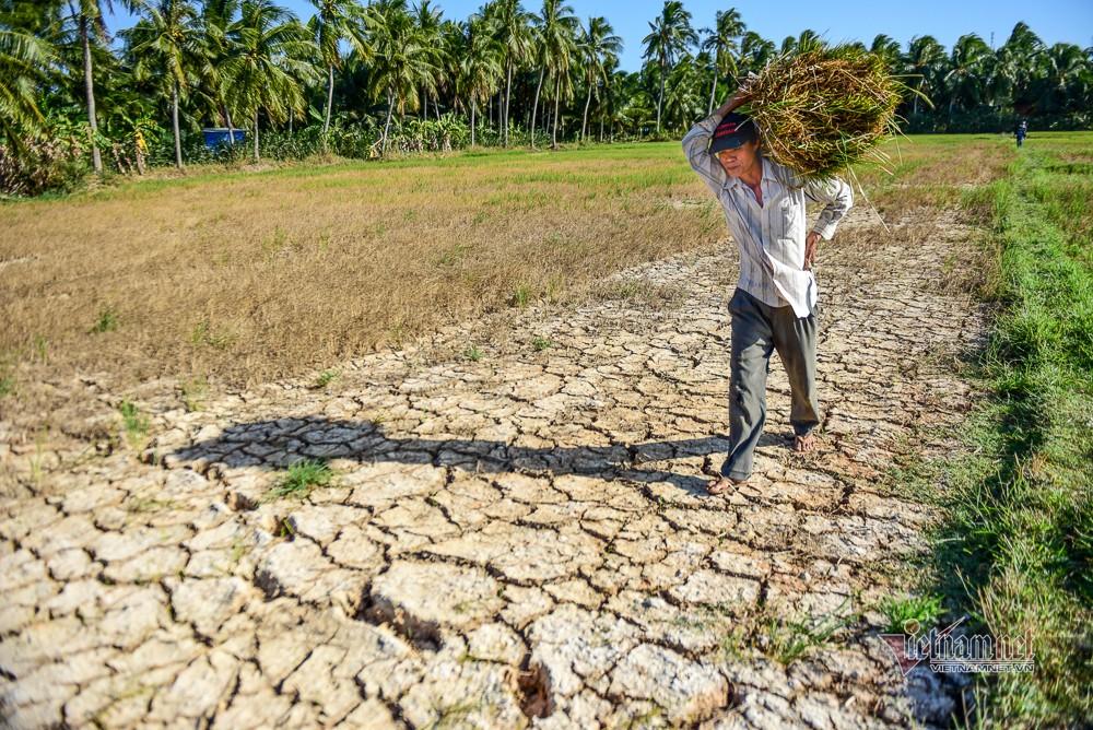Đồng bằng sông Cửu Long có thể tái gặp hạn mặn lịch sử