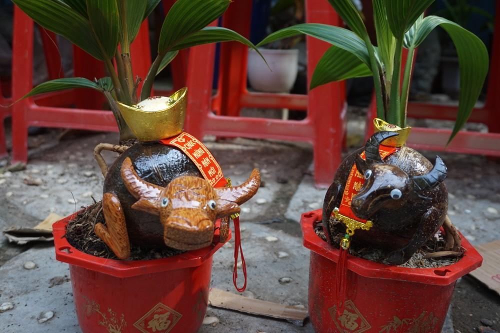 Độc đáo bonsai dừa tạo hình con trâu đón Tết Tân Sửu 2021