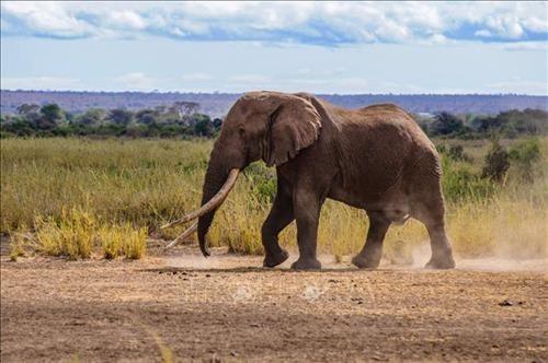 Sốc, voi có thể toát 500 lít mồ hôi mỗi ngày