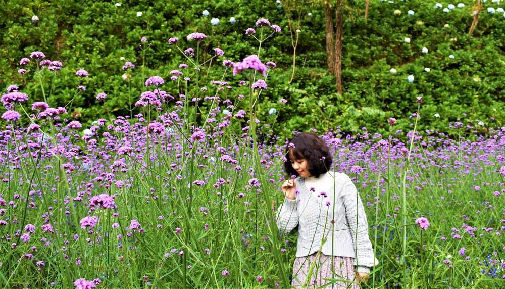 Du khách đến Đà Lạt Tết dương lịch mê mẩn những cánh đồng hoa