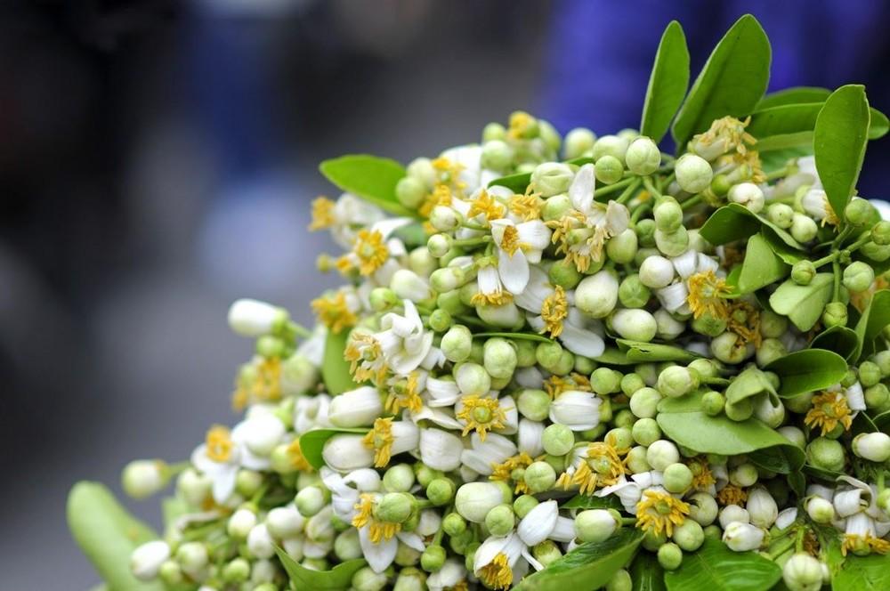 Thị trường 23/2: Tàu du lịch Hạ Long 'chết lặng', hoa bưởi 'cháy hàng' cận rằm tháng Giêng