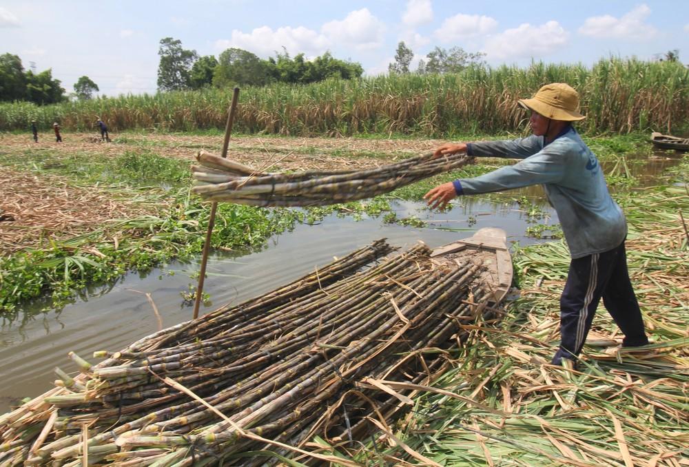 Áp dụng thuế chống bán phá giá đối với đường mía từ Thái Lan
