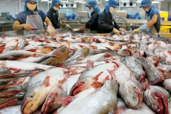 Campuchia hủy lệnh cấm nhập khẩu bốn loại cá da trơn từ Việt Nam