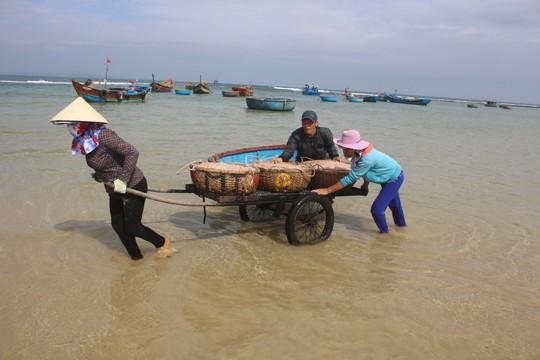 Giáp Tết ngư dân Quảng Ngãi trúng đậm 'lộc biển' ảnh 1