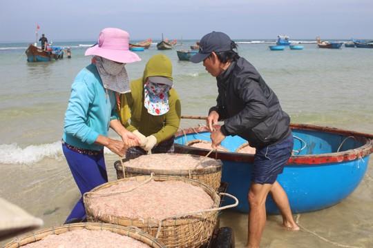Giáp Tết ngư dân Quảng Ngãi trúng đậm 'lộc biển' ảnh 4