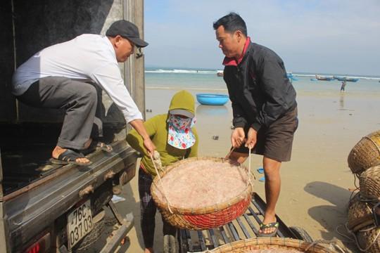 Giáp Tết ngư dân Quảng Ngãi trúng đậm 'lộc biển' ảnh 7
