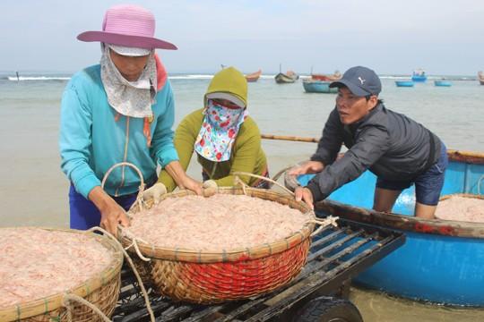 Giáp Tết ngư dân Quảng Ngãi trúng đậm 'lộc biển' ảnh 2