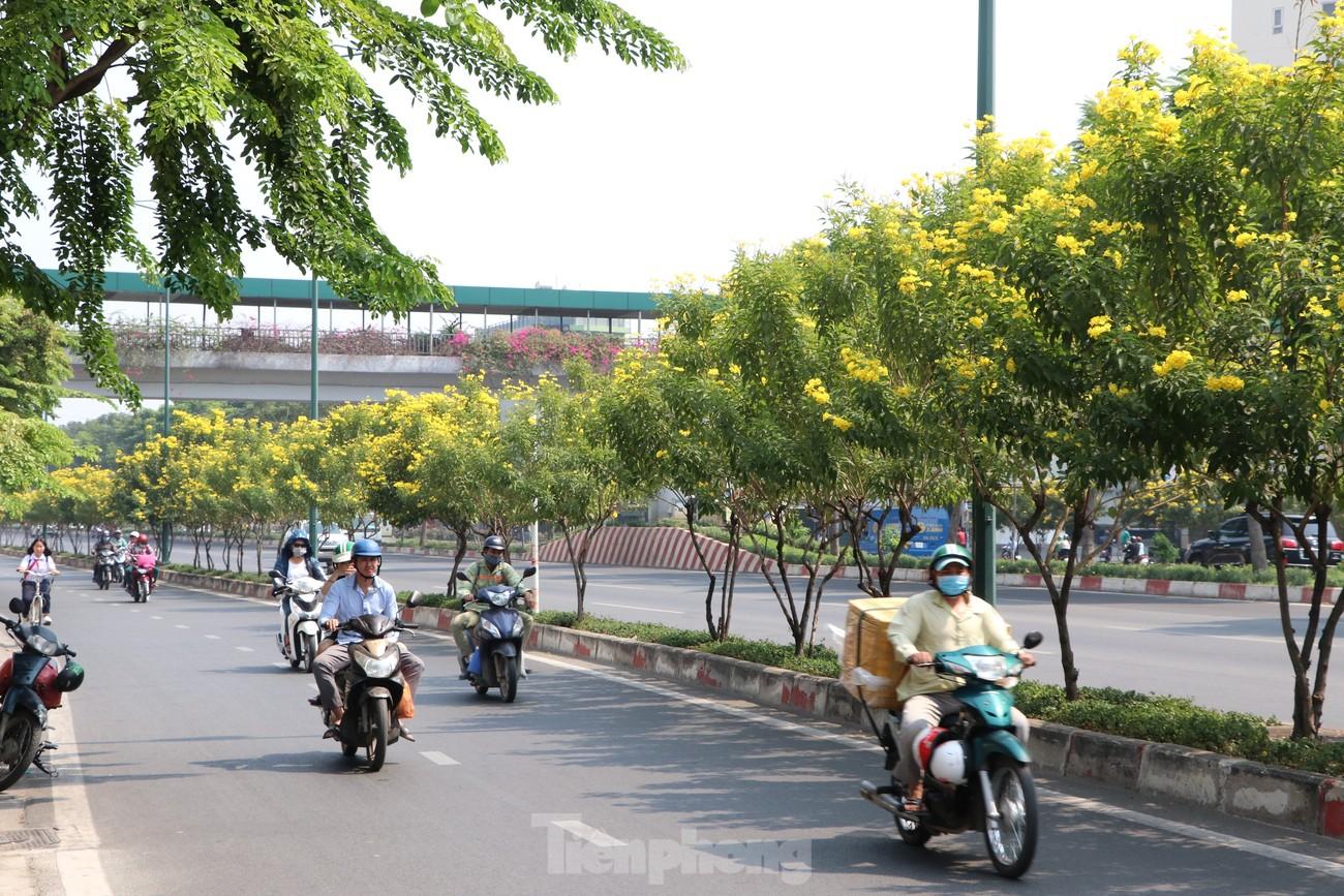 Hoa huỳnh liên nở vàng rực đường phố Sài Gòn ngày giáp Tết ảnh 2