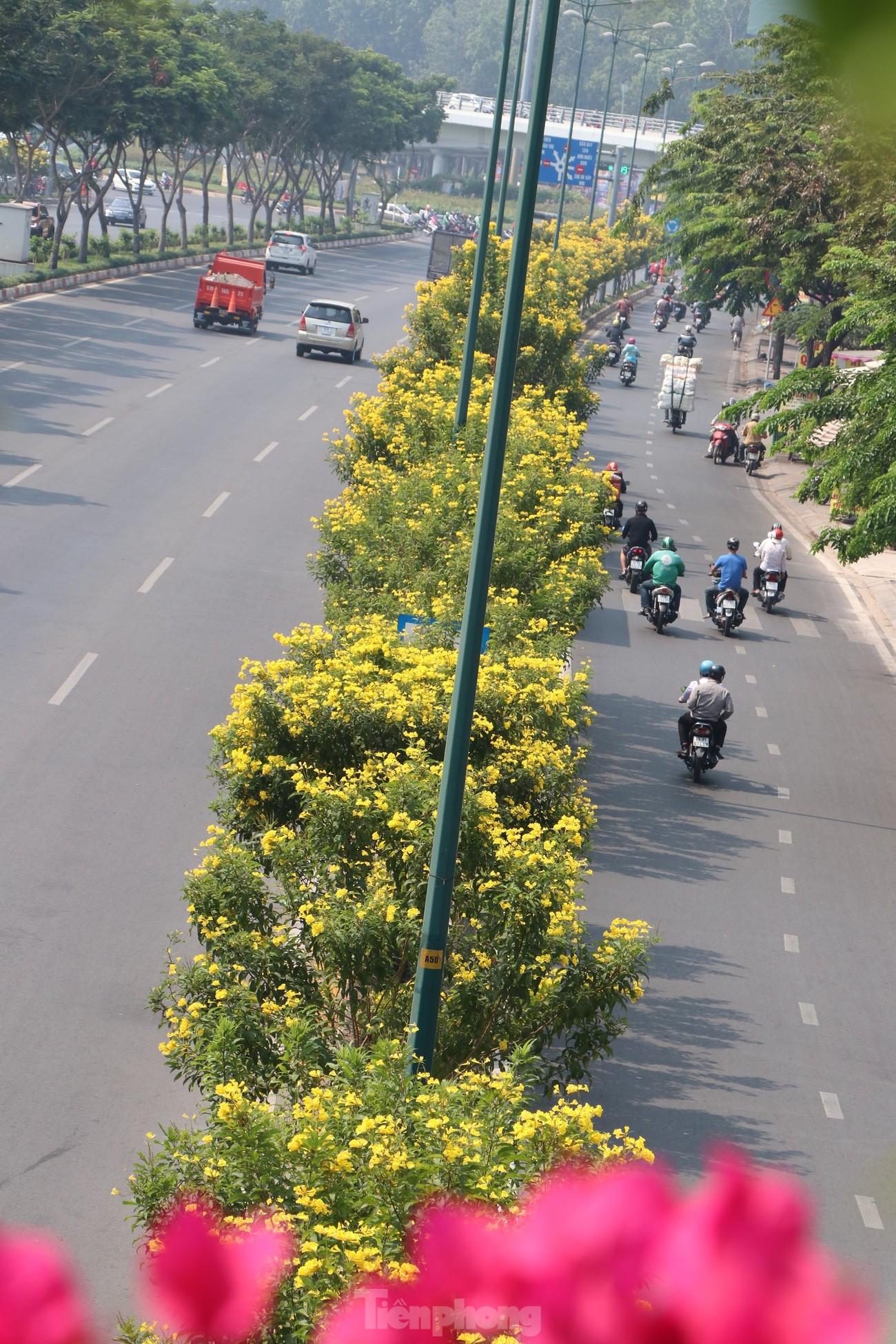 Hoa huỳnh liên nở vàng rực đường phố Sài Gòn ngày giáp Tết ảnh 3