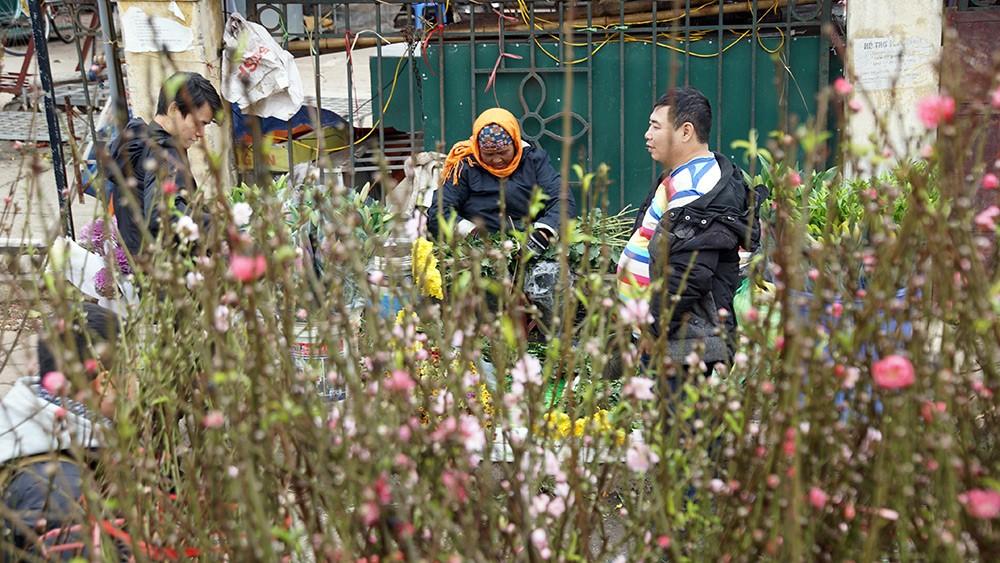 Hoa đào bung nở trong giá rét, khoe sắc trên phố Hà Nội ảnh 5