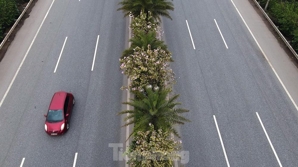 'Bay' trên đại lộ Võ Nguyên Giáp, mê mẩn ngắm hoa ban Tây Bắc ảnh 2
