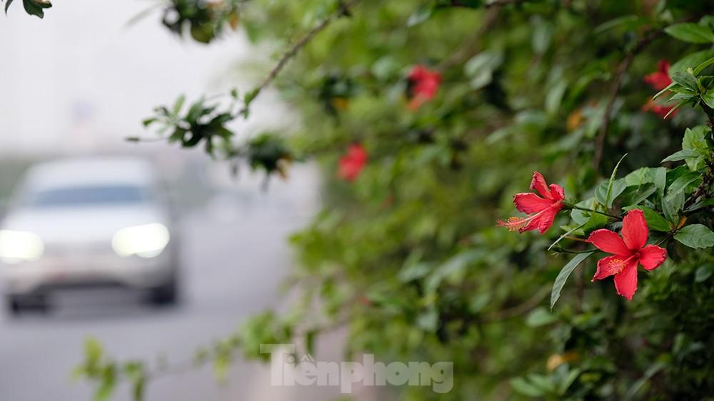 'Bay' trên đại lộ Võ Nguyên Giáp, mê mẩn ngắm hoa ban Tây Bắc ảnh 8