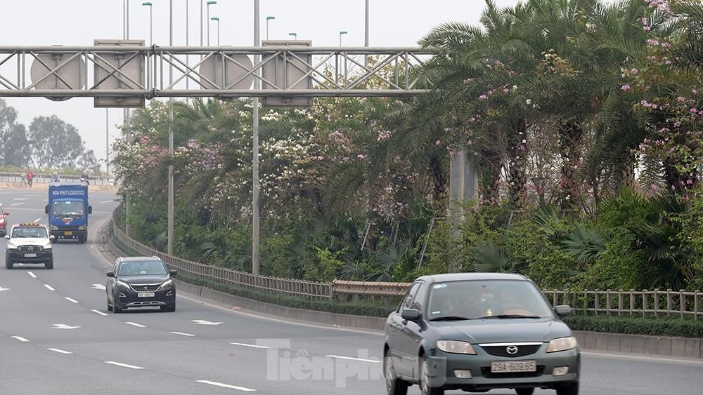 'Bay' trên đại lộ Võ Nguyên Giáp, mê mẩn ngắm hoa ban Tây Bắc ảnh 10