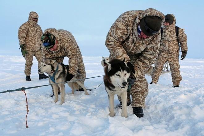 Quân khuyển đặc biệt của lính dù Nga ở Bắc Cực ảnh 1