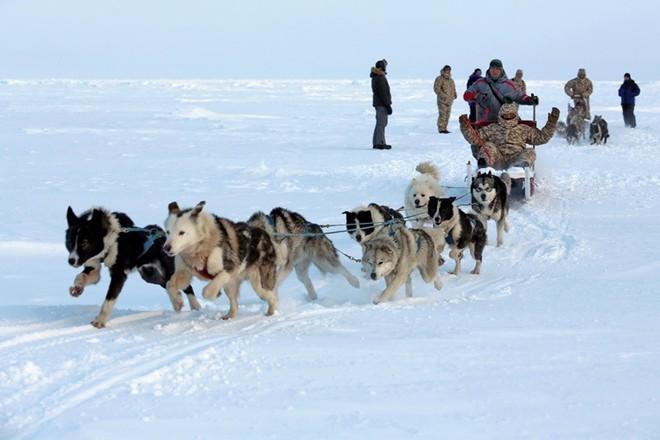 Quân khuyển đặc biệt của lính dù Nga ở Bắc Cực ảnh 4