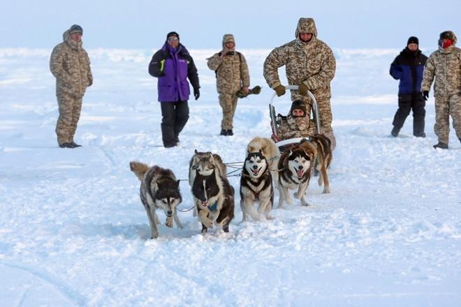 Quân khuyển đặc biệt của lính dù Nga ở Bắc Cực ảnh 5