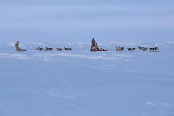 Quân khuyển đặc biệt của lính dù Nga ở Bắc Cực ảnh 7
