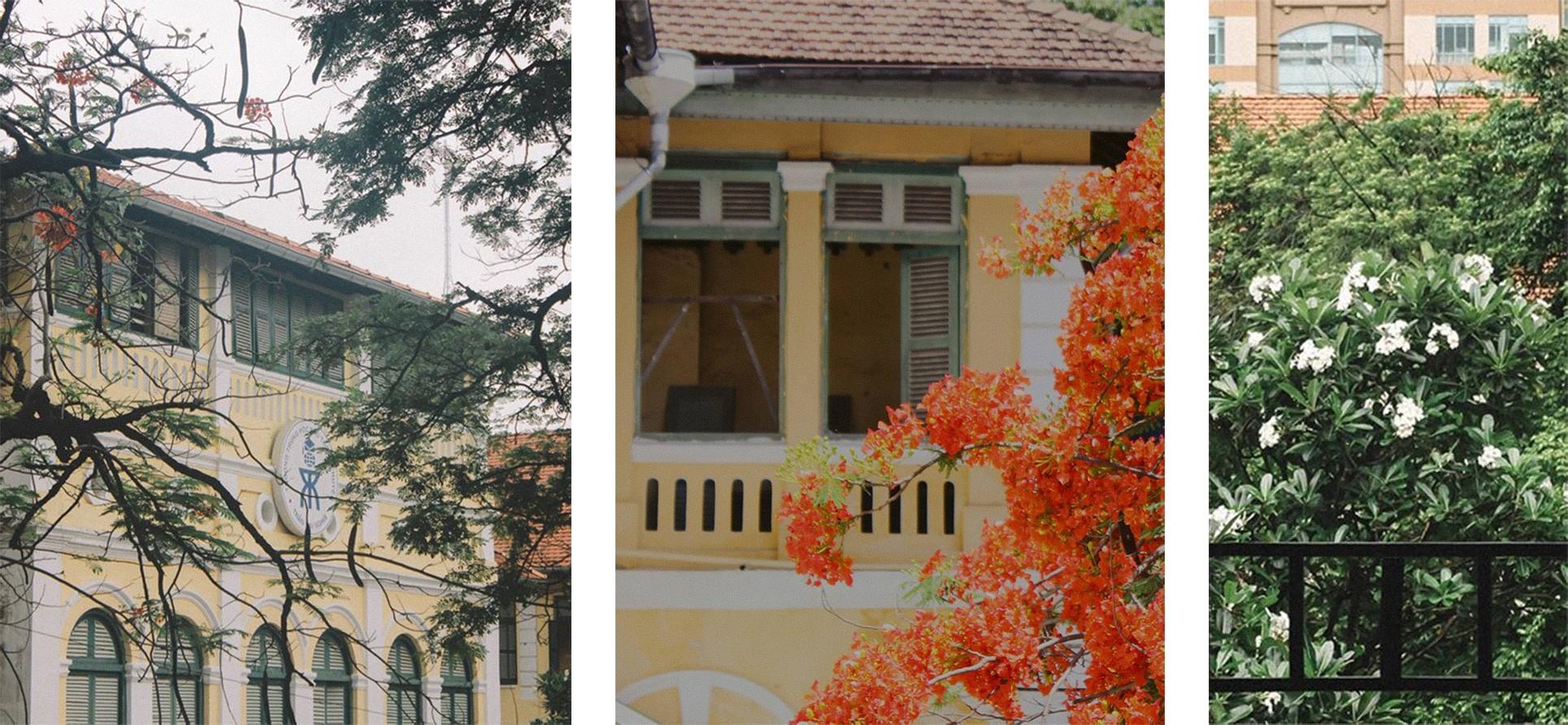 Ngôi trường trong mơ: Những ô cửa sổ sắc màu của trường THPT Chuyên Trần Đại Nghĩa ảnh 4