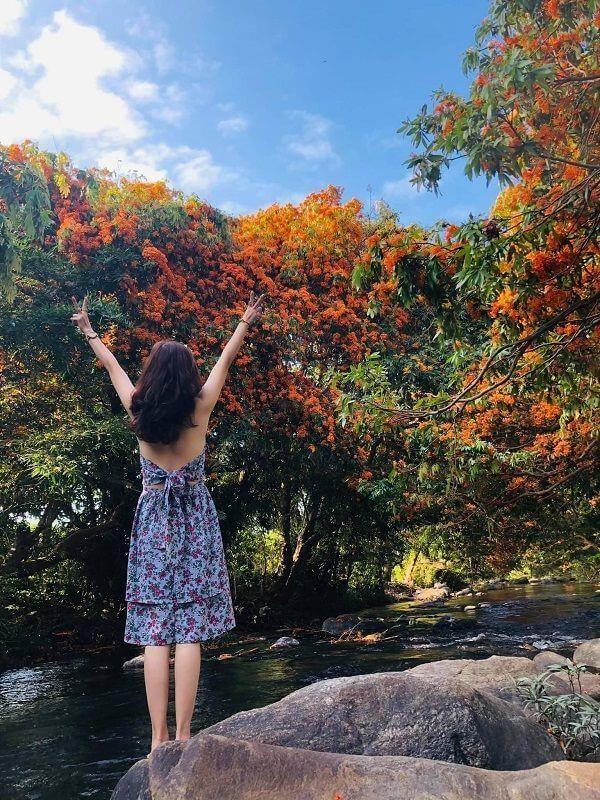 """Hoa trang rừng nở rộ sau nhiều năm, suối Tà Má trở thành điểm """"check-in"""" mới của giới trẻ ảnh 2"""