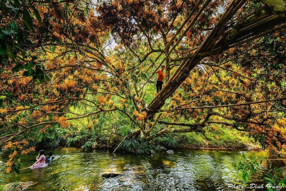 """Hoa trang rừng nở rộ sau nhiều năm, suối Tà Má trở thành điểm """"check-in"""" mới của giới trẻ ảnh 7"""