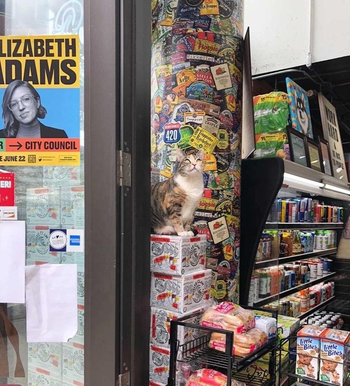 """Hóa ra hội """"quàng thượng"""" chính là """"trùm cuối"""" trong các tiệm tạp hóa ở New York ảnh 4"""