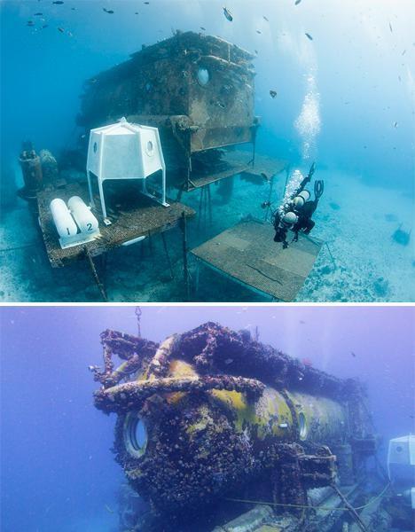 Khám phá 7 kỳ quan thế giới dưới đáy đại dương ảnh 6