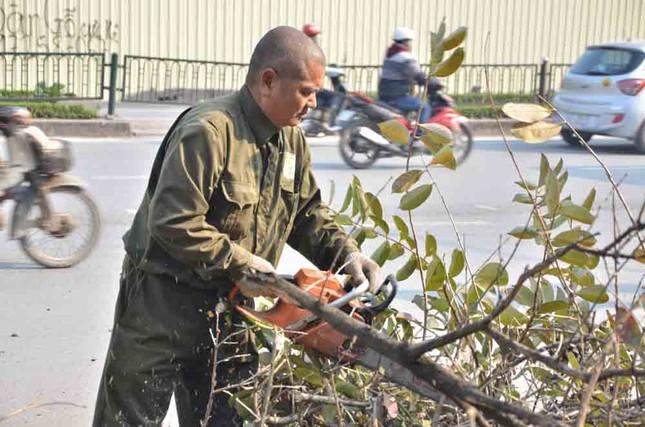 Chặt hạ, di chuyển hàng cây trước ĐH Giao thông ảnh 2