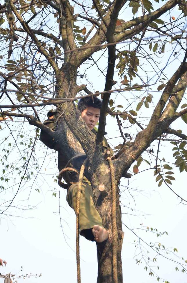 Chặt hạ, di chuyển hàng cây trước ĐH Giao thông ảnh 4
