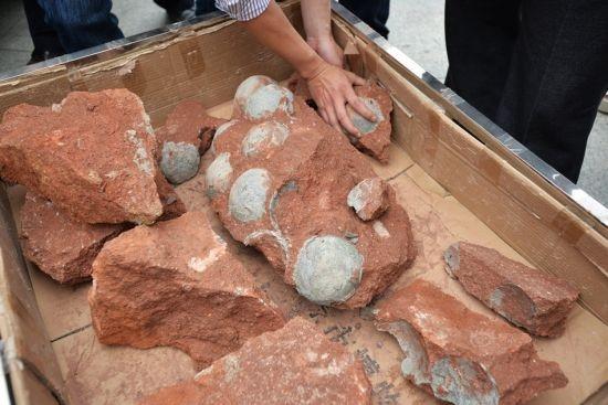 Phát hiện hàng chục quả trứng khủng long dưới nền đường ảnh 1