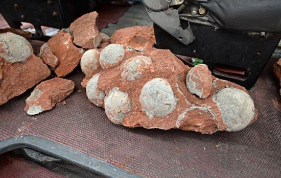 Phát hiện hàng chục quả trứng khủng long dưới nền đường ảnh 2