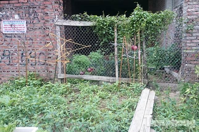 Người dân Thủ đô trồng rau trên biệt thự tiền tỷ bỏ hoang ảnh 4