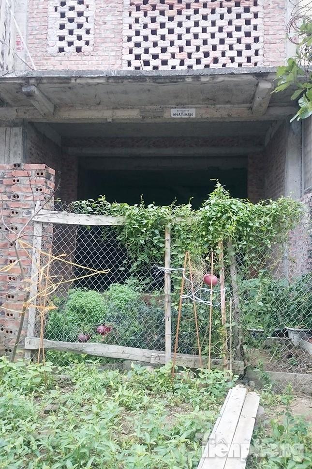 Người dân Thủ đô trồng rau trên biệt thự tiền tỷ bỏ hoang ảnh 6