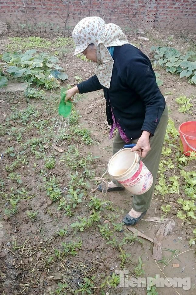 Người dân Thủ đô trồng rau trên biệt thự tiền tỷ bỏ hoang ảnh 10