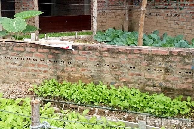 Người dân Thủ đô trồng rau trên biệt thự tiền tỷ bỏ hoang ảnh 1