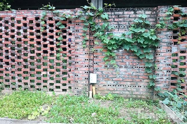 Người dân Thủ đô trồng rau trên biệt thự tiền tỷ bỏ hoang ảnh 2