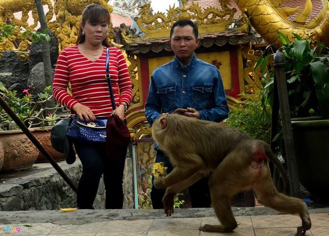Cận cảnh bầy khỉ nương nhờ nơi cửa phật ở Bình Dương ảnh 17