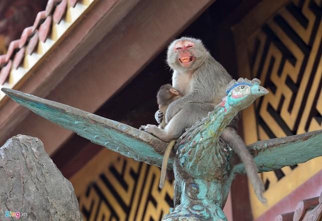 Cận cảnh bầy khỉ nương nhờ nơi cửa phật ở Bình Dương ảnh 3