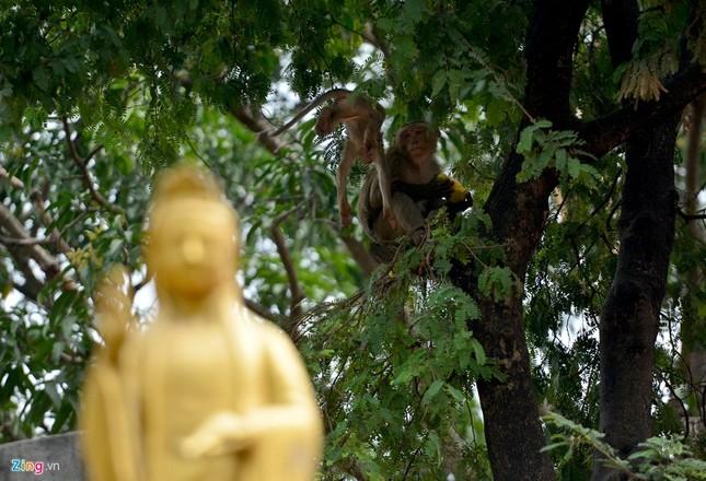 Cận cảnh bầy khỉ nương nhờ nơi cửa phật ở Bình Dương ảnh 4