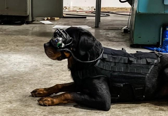 Quân đội Mỹ trang bị kính AR cho… chó ảnh 1