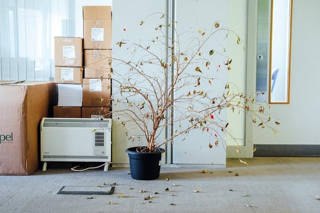 COVID-19 đến, công sở hoang lạnh, cây chết gục và thông điệp ấn tượng từ những tấm ảnh ảnh 5