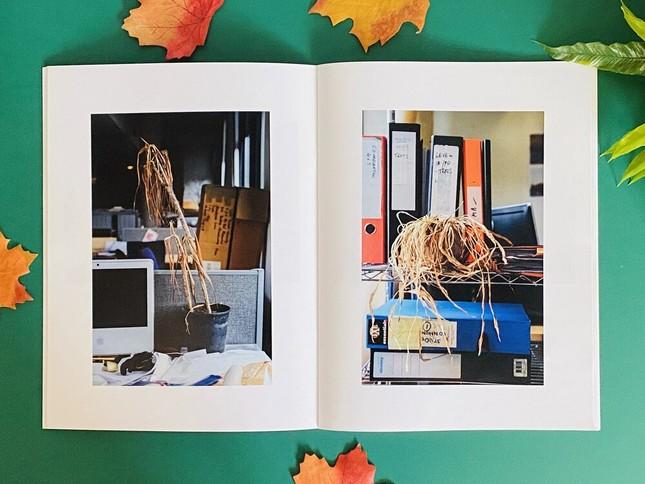 COVID-19 đến, công sở hoang lạnh, cây chết gục và thông điệp ấn tượng từ những tấm ảnh ảnh 1