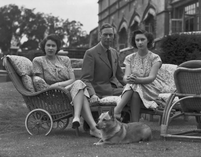 Bầy Corgi của Nữ hoàng Elizabeth thì nổi tiếng quá rồi, nhưng có những điều bạn chưa biết ảnh 2