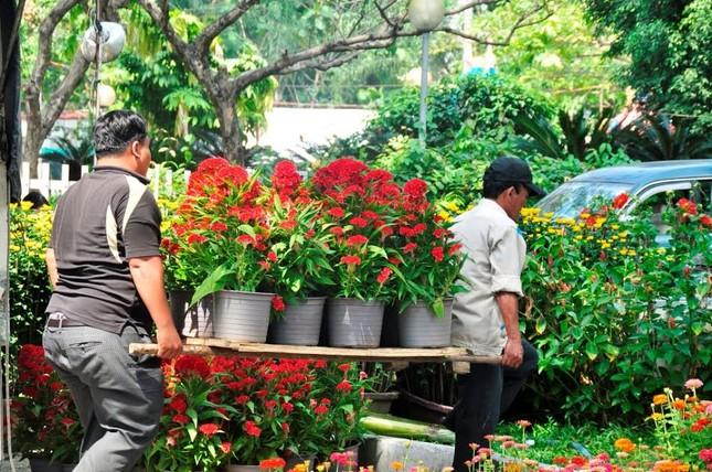 Đường phố Sài Gòn ngập hoa, nhộn nhịp không khí Tết ảnh 7