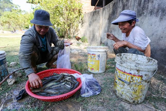 Bắt cá khi ruộng đồng cạn nước ảnh 11