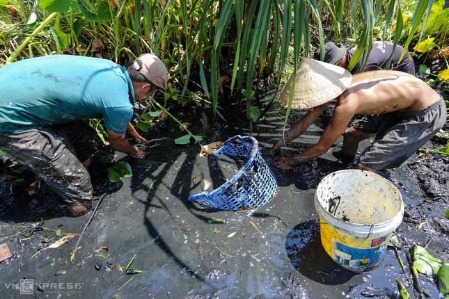 Bắt cá khi ruộng đồng cạn nước ảnh 9