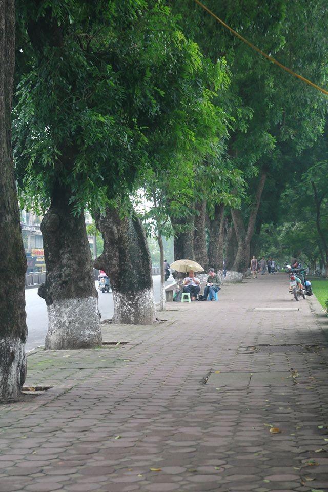 Hình ảnh Chặt hàng cổ thụ đẹp nhất Hà Nội: Xót xa như rụng bàn tay số 3