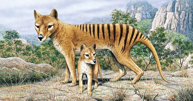1001 thắc mắc: Hổ 'yêu đương' thế nào, vì sao hổ dữ không ăn thịt con? ảnh 2
