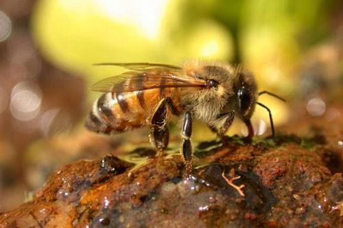 1001 thắc mắc: Ong vò vẽ kinh khủng ra sao, làm thế nào để nhận biết chúng? ảnh 2